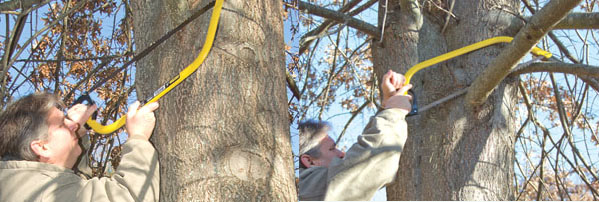 When trimming tree limbs, begin with an undercut.