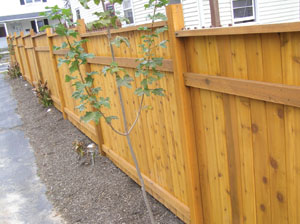 Show is the completed fence, constructed from Western Red Cedar.