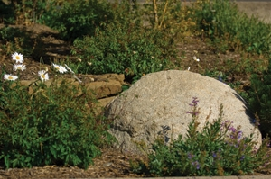 Here's the round rock Ashland's crew set into the landscape. Placing the large rock in a hole makes it appear to have always been there.
