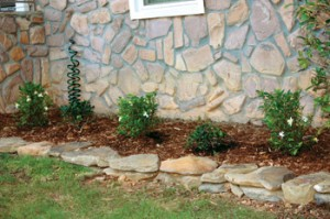 I replaced an old cedar shrub with a row of alternating Gardenias and Indian Hawthorne shrubs. Water the new shrubs daily for 30 days after planting.