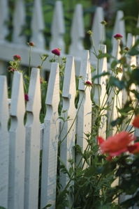 Letting the garden spill through the pickets creates a nice blend of fence and landscaping.