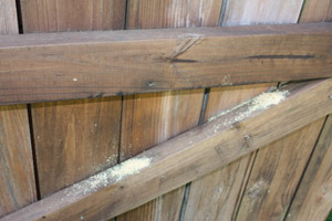 Locate and mark the damaged areas Repair Carpenter Bee Damage