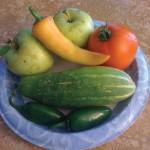 """Start-Up Tips for the """"Green"""" Gardener"""