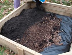 Adding top soil to garlic garden