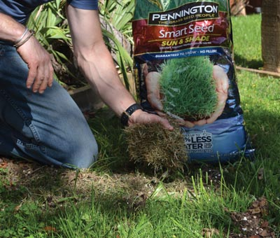 Ironically, the thatch we pull out of the lawn with the power rake is ideal for holding seed on bare spots. After sowing the seed, loosely sprinkle thatch on the area and gently water until the seed and thatch set.