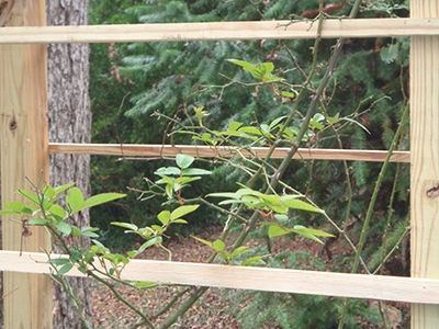 The wood strips give rose bushes and running plants a place to climb and grow as a natural way to decorate the outdoor environment.