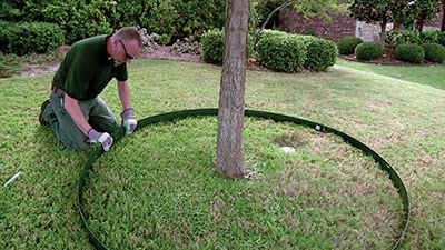 Use two 8' strips to make a tree ring with a 4-1/2' diameter.