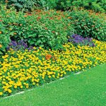 Flowering Groundcovers Brighten the Yard