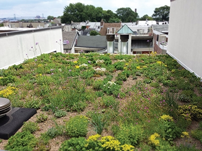 Most Small Scale DIY Green Roofs Are Found On Sheds, Vegetation On A Porch  Roof, Or The Roof Of A Garage. Hereu0027s One Overlooking Rooftops In  Philadelphia.