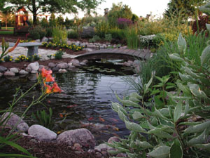 Natural pond ecosystem for Garden pool ecosystem