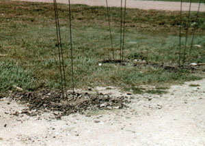 Rebar posts set in concrete